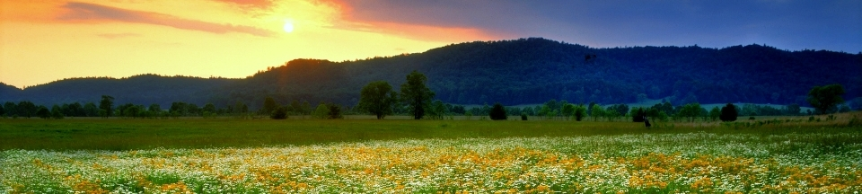summer, cades cove, great smoky mountains, tn